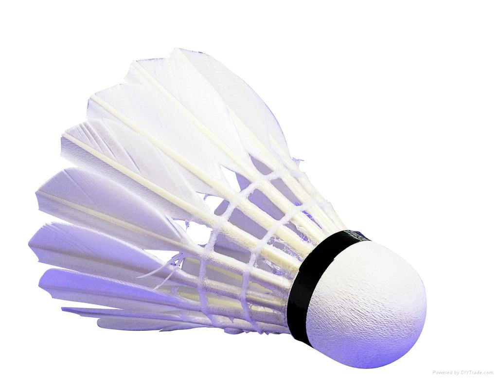 Badminton En Salle on fishing equipment