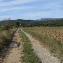 ATV children